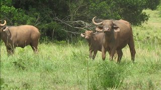Image result for kwale game reserve