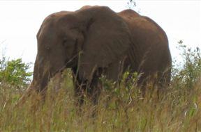 Shimba Hills National Reserve elephants