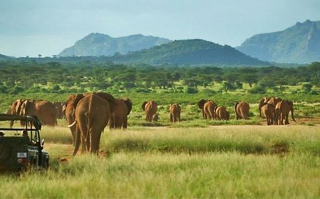 Elephant Watch Safaris