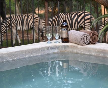 Watch the animals walk past the house while sitting in the pool