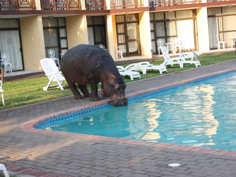 Elephant Lake Hotel St Lucia Kwazulu Natal