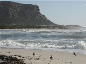 Elands Bay Beach