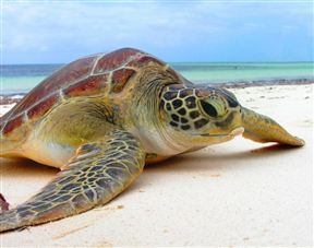 Turtle ready for release from the Local Ocean Trust