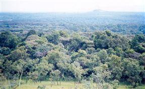 Kakamega Forest Kenya