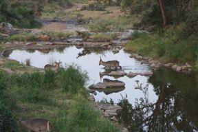 Krugerpark Crocodile Bridge Gate