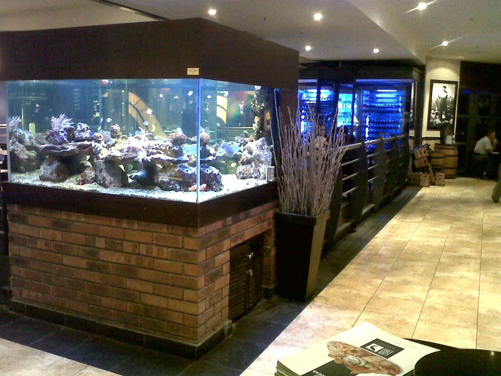 Freshwater aquarium fish cape town - Freshwater Aquarium Fish Cape Town