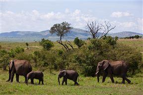 Elephants in Masai Mara National Reserve