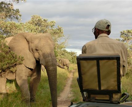 Authentic safari in Thornybush