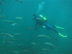 Scuba diving in Tsitsikamma National Park