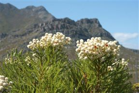 Rod's Trail fynbos