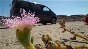 Time Travel desert flora