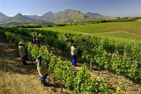 Knorhoek Wine Estate