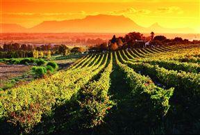 Saxenburg Wines