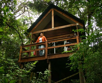 2 Forest Lodge Cabins are built high in the Canopy of the indigenous forest.   © Copyright: Kurisa Moya Nature Lodge (Ben de Boer)