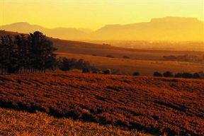 Perdeberg Winery