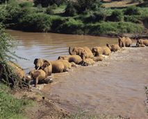 Elephants crossing the river next to the camp.