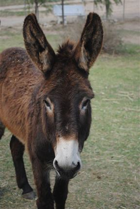 Eseltjiesrus Donkey Sanctuary
