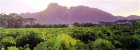 Kleinfontein Wine Farm