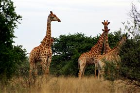 Sandveld Nature Reserve