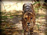 Free State Safari
