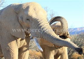Elephants at Safari park near Hermanus