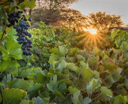 Neuras Wine And Wildlife Estate
