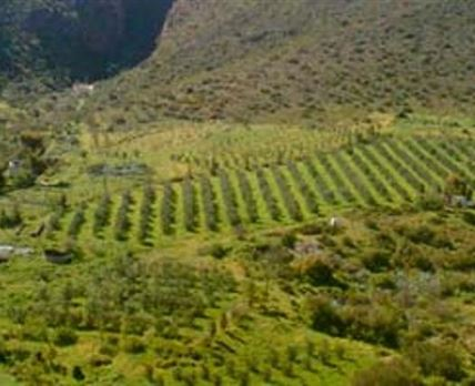 Located on a working certified organic olive and chilli farm
