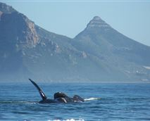 We also regularly have whales in our bay