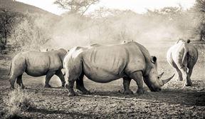 Mokolodi Nature Reserve Accommodation