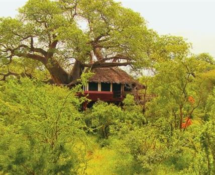 Tree House hidden in the trees