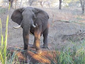 Manyoni Private Game Reserve Accommodation