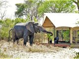 Limpopo Province Tented Camp