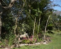 Our gardens are child friendly. They are filled with tropical plants, and lead down to the beach. Over 120 bird species have been recorded on our property. © Outspan Inn, Port St Johns