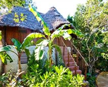 Jungle bungalow outside