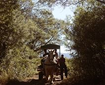 Bobby takes the cart with guests on a beautiful cart ride through fynbos