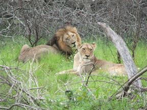 Great Letaba Game Park Accommodation