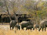 Matabeleland North Safari