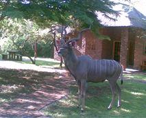 Wild life © Phumula Kruger Lodge