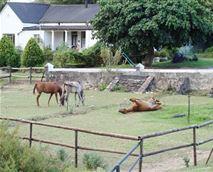 Horses on the premises