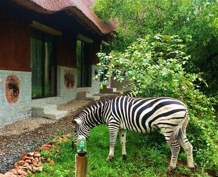 © Green Kruger Lodge