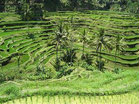 Tellagalang Rice Terraces
