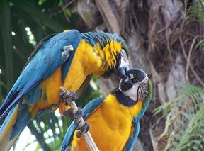 Bali Bird Park and Reptile Park