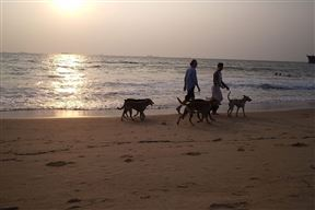 Beach walk with pets on Candolim