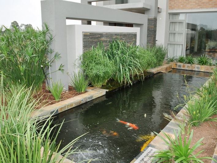 Merchant business class hotel for Fish pond business