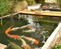 Koi Pond outside Room # 1