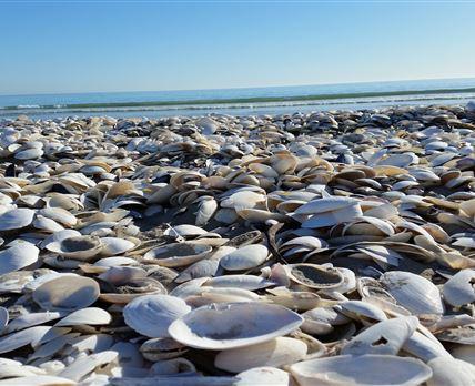 Shells shells!