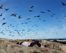 Come enjoy the feeling of bird freedom!