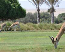 Gold course and wild life