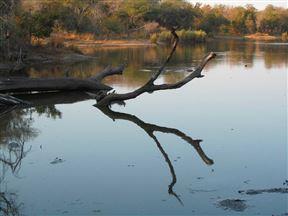 Lake Panic, Kruger
