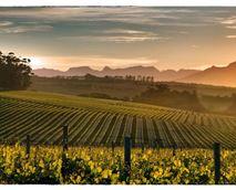 Nearby Kenridge vineyards